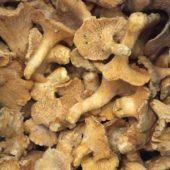 Funghi Galletti Congelati 5-8 cm