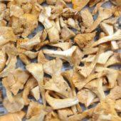 Funghi Galletti Congelati Tagliati in 4